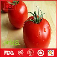 Chinese fresh tomato of fresh vegetables