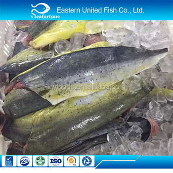Fish frozen mahi mahi fillet big size buy new arrival for How to freeze fish