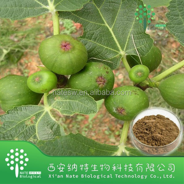 100% Natural fig leaf extract/fig leaf extract powder/fig leaf P.E.