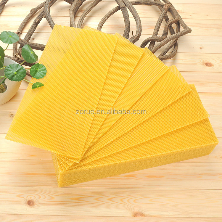 Apis mellifera bee wax comb foundation sheet