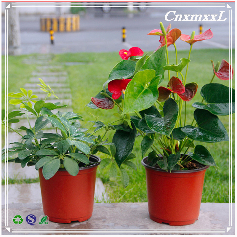 Professional plastic pots for nursery plants allibaba com orchid plants with great price