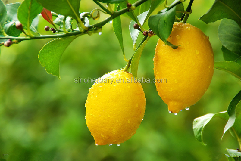 High yield lemon tree seeds for planting buy lemon tree for Buy a lemon tree plant