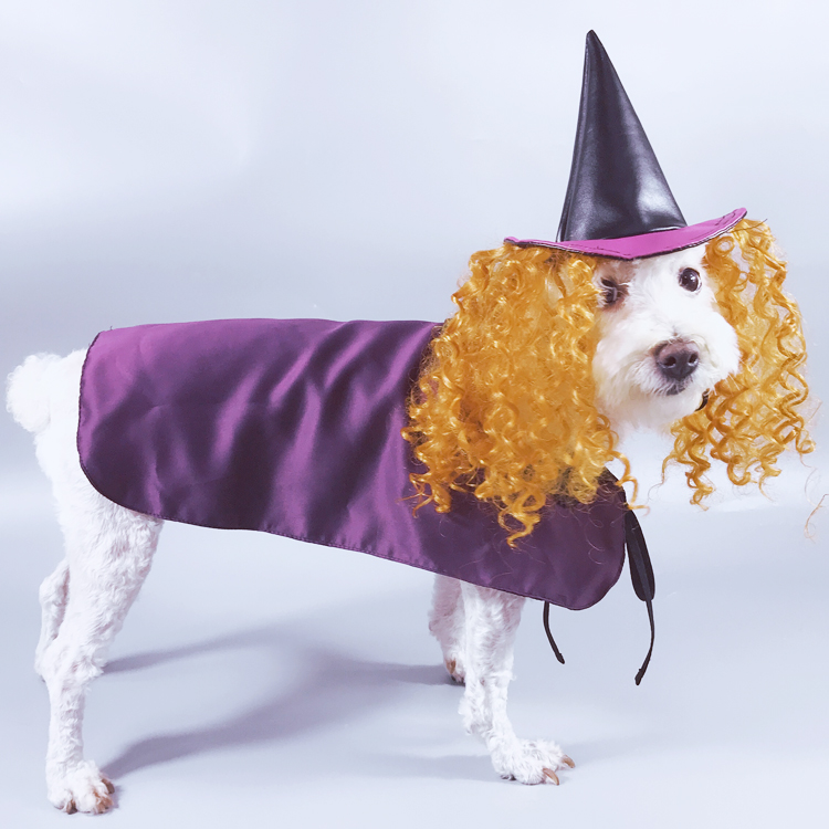 Wholesale Funny Witch Halloween Costumes <strong>Dog</strong> With Cap