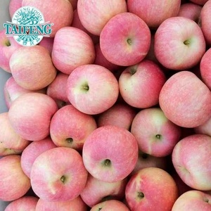 Fresh Red Fuji Apple for Russia Market