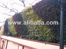 ornamental plants and wall garden