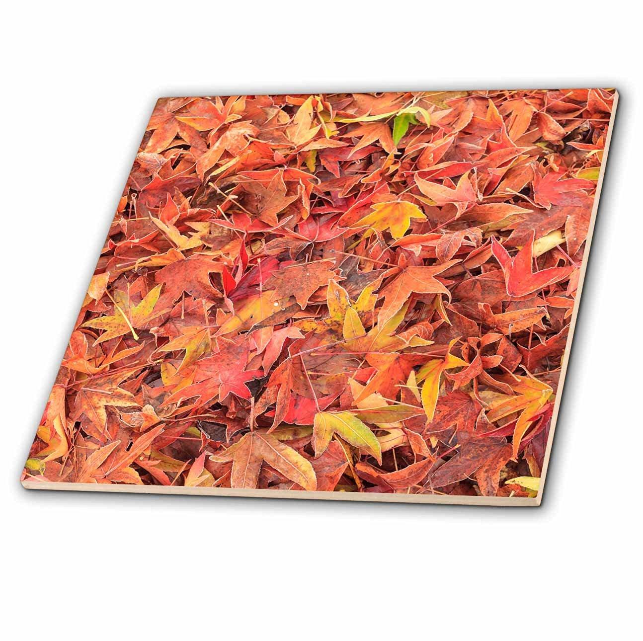 Danita Delimont - Autumn - Autumn color, maple leaves, Mill Creek, Washington State, USA - 6 Inch Ceramic Tile (ct_231821_2)