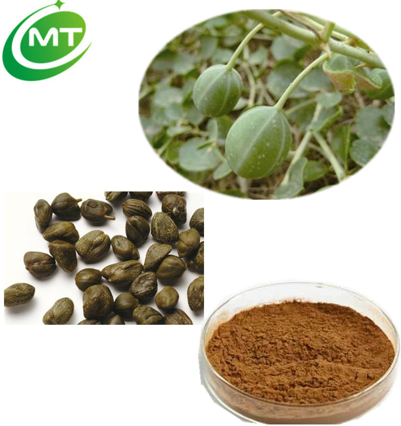 Top quality used for indigestion 12:1 Caper Extract