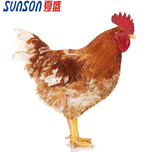 Manufacture supply poultry feed additive of enzymes