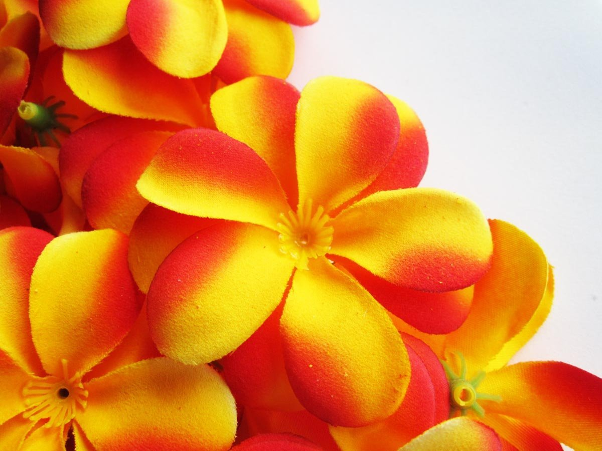 Cheap red frangipani flowers find red frangipani flowers deals on get quotations 12 yellow red hawaiian plumeria frangipani silk flower heads 3 artificial izmirmasajfo