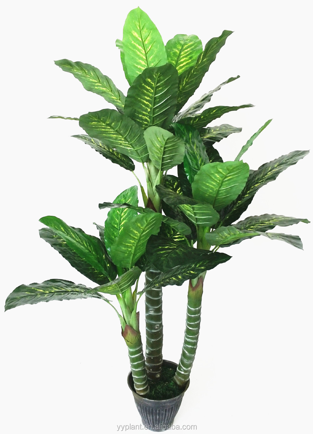 Diffenbachia Plant X 14 Lvs Home Decorative Green Leaves Outdoor ...
