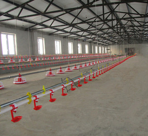 Huabang automatic poultry equipment chicken farm feeding line