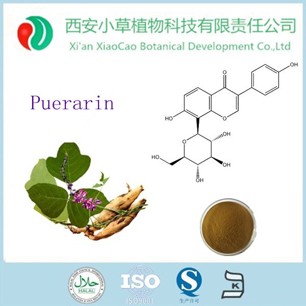 Hot sale pueraria extract powder puerarin ,buy pueraria powder with low price