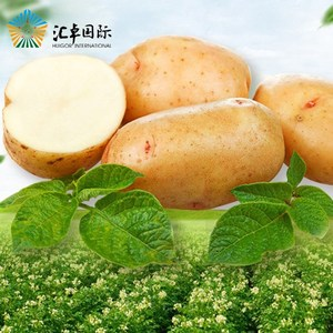 Shandong Fresh Holland Potatoes
