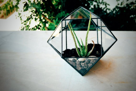 Air Plant Handmade Box Small Geometric Glass Terrarium
