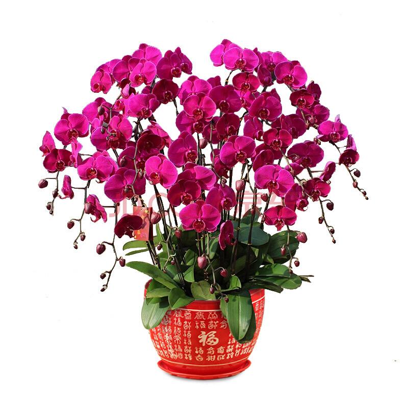 Доставка, купить орхидеи цветы оптом в харькове