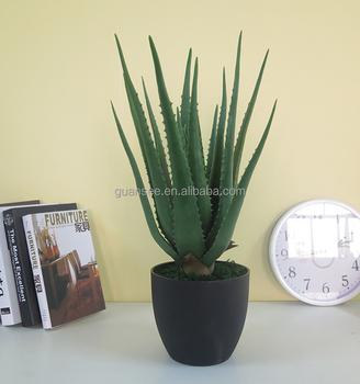 En Gros Personnaliser Pot Plantes Succulentes Rayé Daloe Vera D