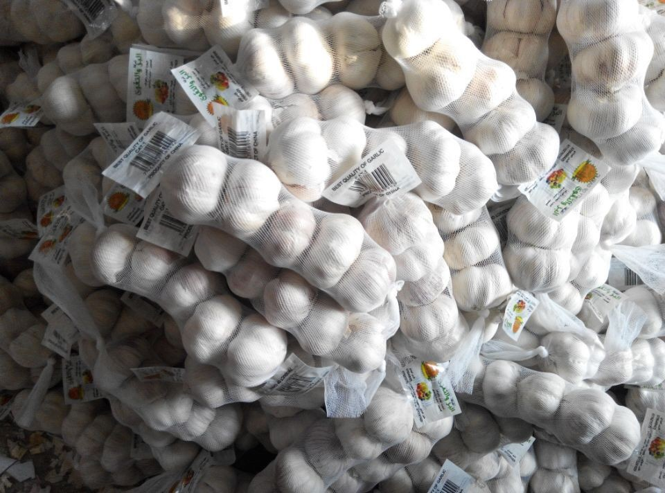 your best choice of chinese garlic with pure white and normal white on sale in the coming new year