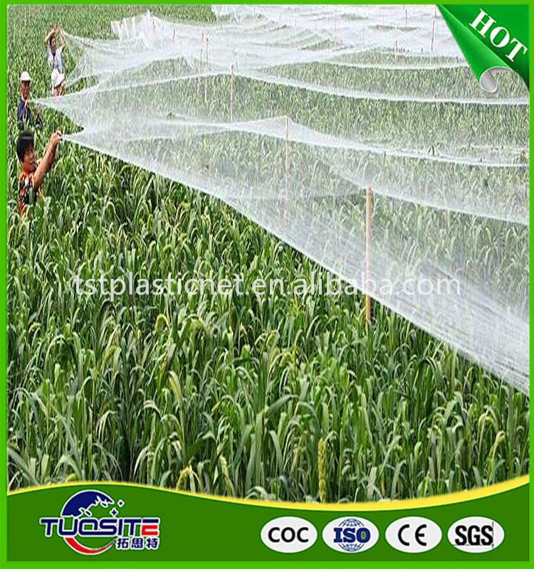 plant supply high quality 100% virgin new material anti bird net