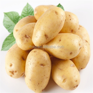 Chinese holland seed potato at good price