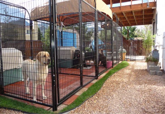 Cheap chain link dog kennels buy dog cagecheap metal for Affordable dog kennels