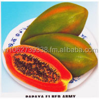 PAPAYA F1 RED ARMY