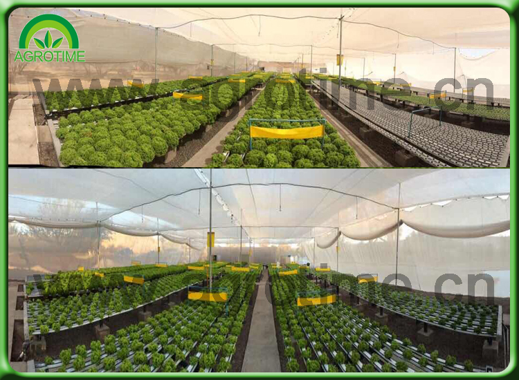 hot used sale hydroponic tropical greenhouse for tomato