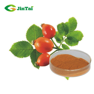 10% by UV Treating Bruises Rose Hip Extract Powder