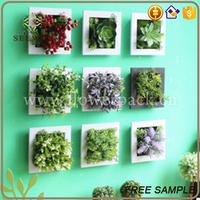 Livingroom decor evergreen ornamental plants