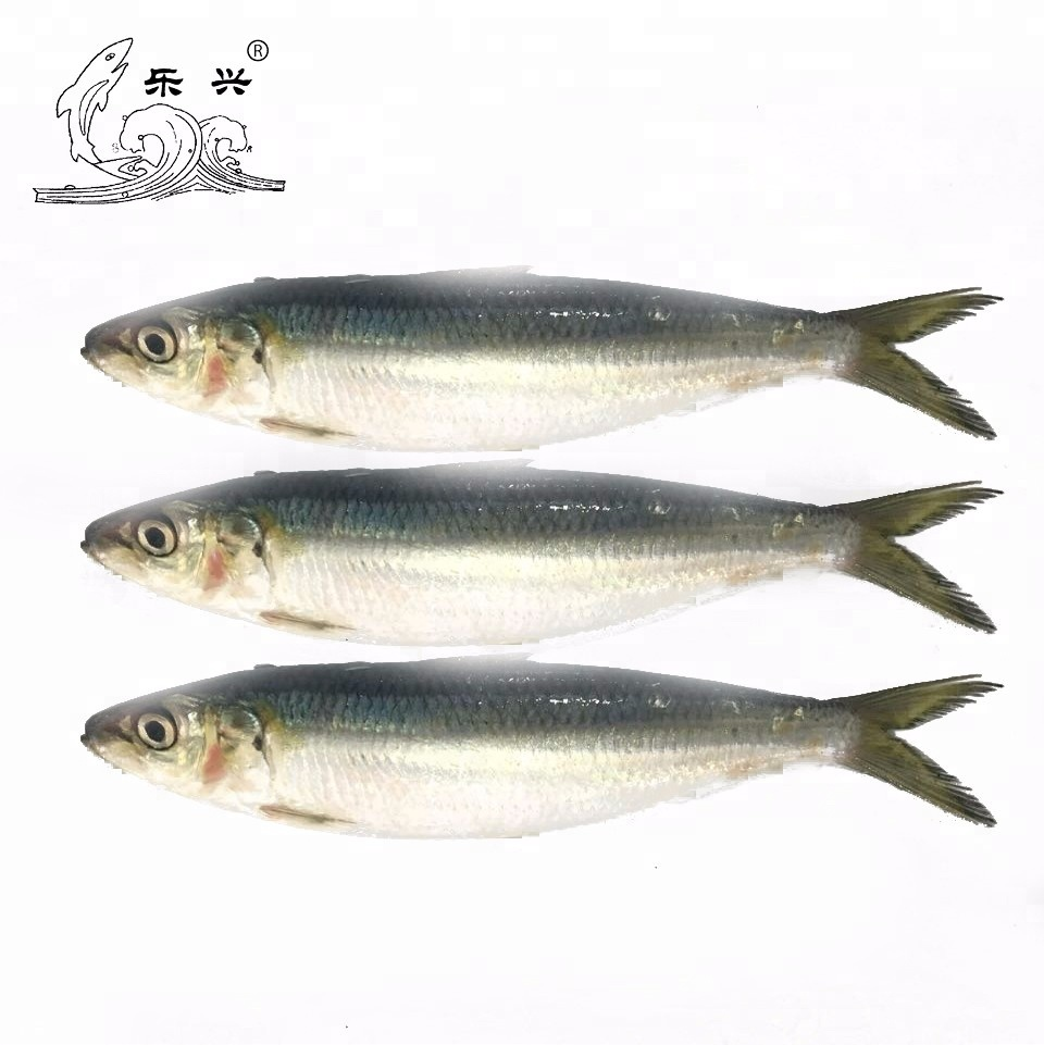 Seafood Frozen Whole Round Herring Sardine <strong>Fish</strong>