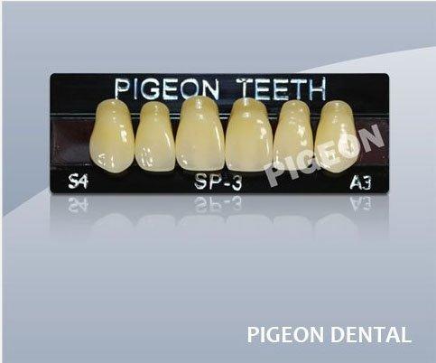 Pigeon Sp-3 L1 Three Layers Anterior Denture Acrylic Teeth
