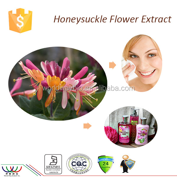 Prevent allergies free sample Kosher cGMP HACCP FDA chlorogenic acid natural honeysuckle extract honeysuckle flower extract