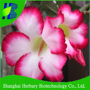 Adenium Plant Price In India - HOT Popular Items