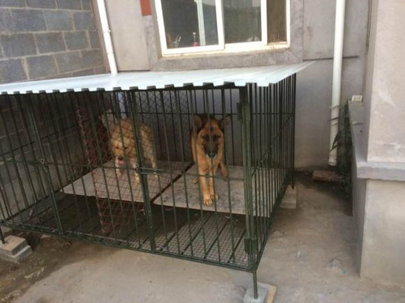 A Utilisé La Clôture De Chien De Fer De Barrière De Jardin De Chien  Cage/chaîne Lien Clôture Chien Courir - Buy Cage Pour Animaux,Cage Pour ...