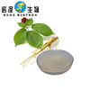High quality pesticide free panax ginseng root extract powder