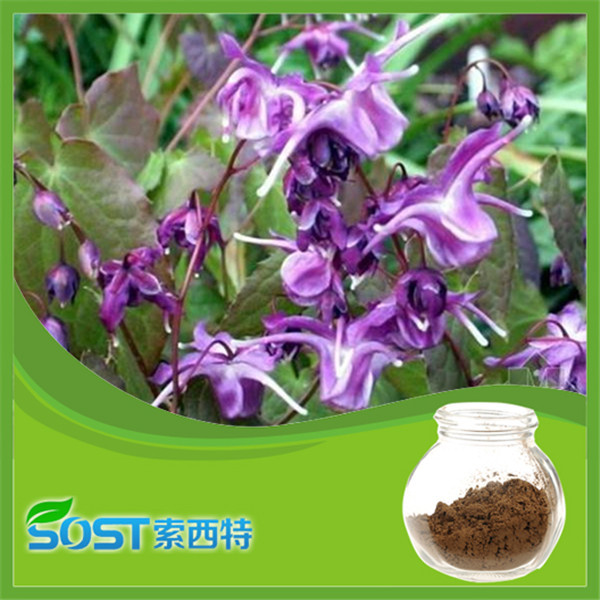 Bulk Herbal medicine factory supply 60% icariin