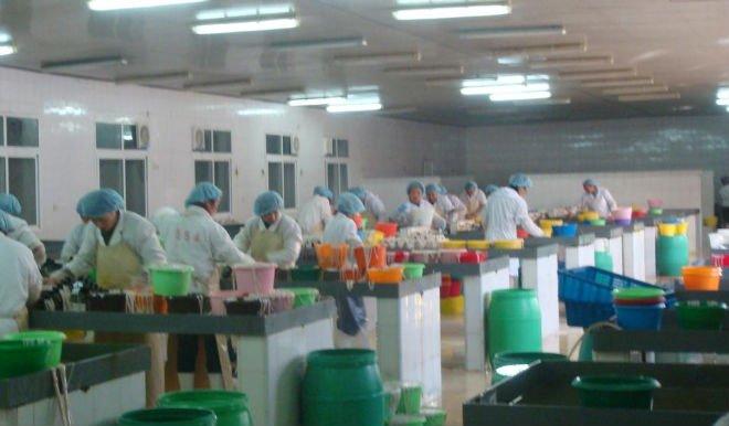 Rifornimento della fabbrica salato naturale di pecora involucri