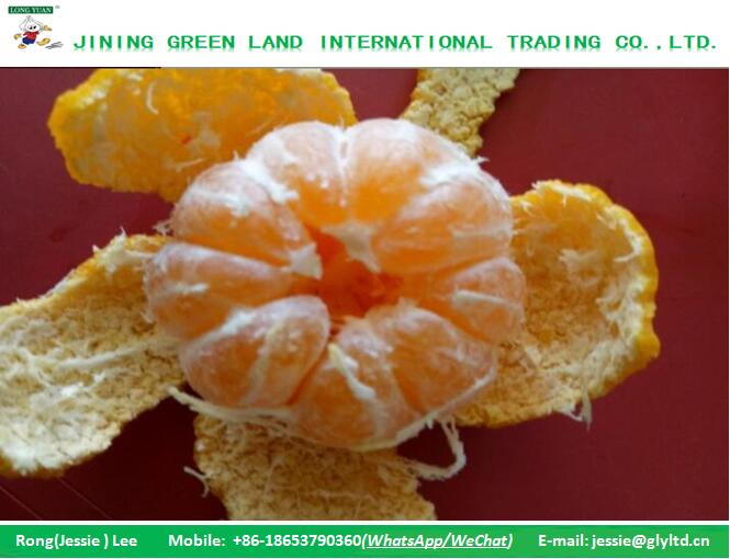 FRESH STYLE AND CITRUS FRUIT PRODUCT TYPE MANDARINS ORANGE