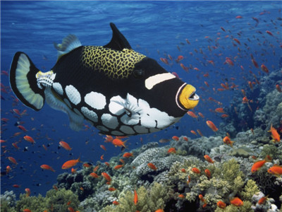 Beautiful Ocean Animal Image 3d Animal Fish Photo
