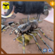 HLT Large Animatronic Insects 3d Model Spider For Amusement