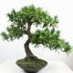 Home Decorating Tree Artificial Pine Tree Small Bonsai for Sale by Factory Direct Price