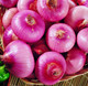 China best selling fresh red yellow onion for export