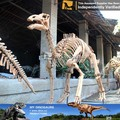 MY Dino-V China dinosaur manufacturer Fossil exporters
