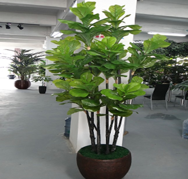 k decorative mango trees for sale with cheap price 2014