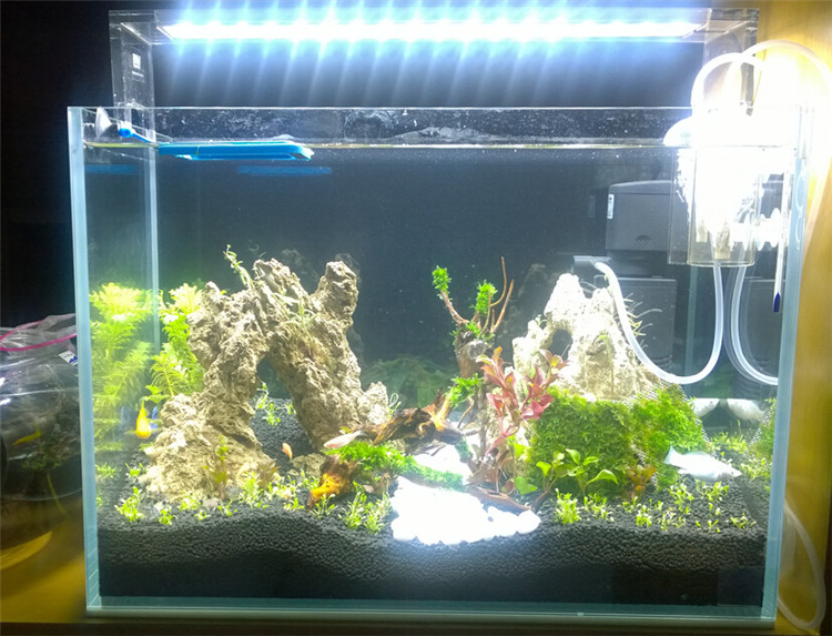High Clarity Rimless Low Iron Glass Cube Garden Aquarium Landscaping Fish  Tank And Planted Tanks