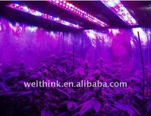 Single 3w chip led grow light,150W,300W