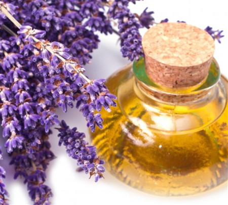 whole sale bulk lavender oil