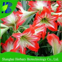 Flower bulbs,belladonna lily bulbs, amaryllis bulbs for cutting
