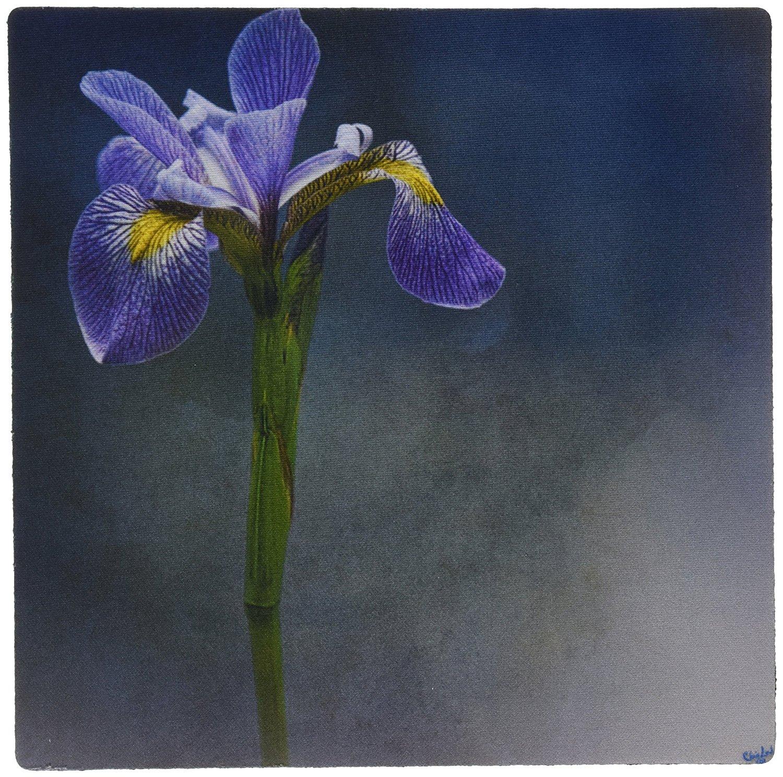 Cheap iris blue flower find iris blue flower deals on line at get quotations 3drose llc 8 x 8 x 025 inches iris mist blue floral flower mouse pad izmirmasajfo