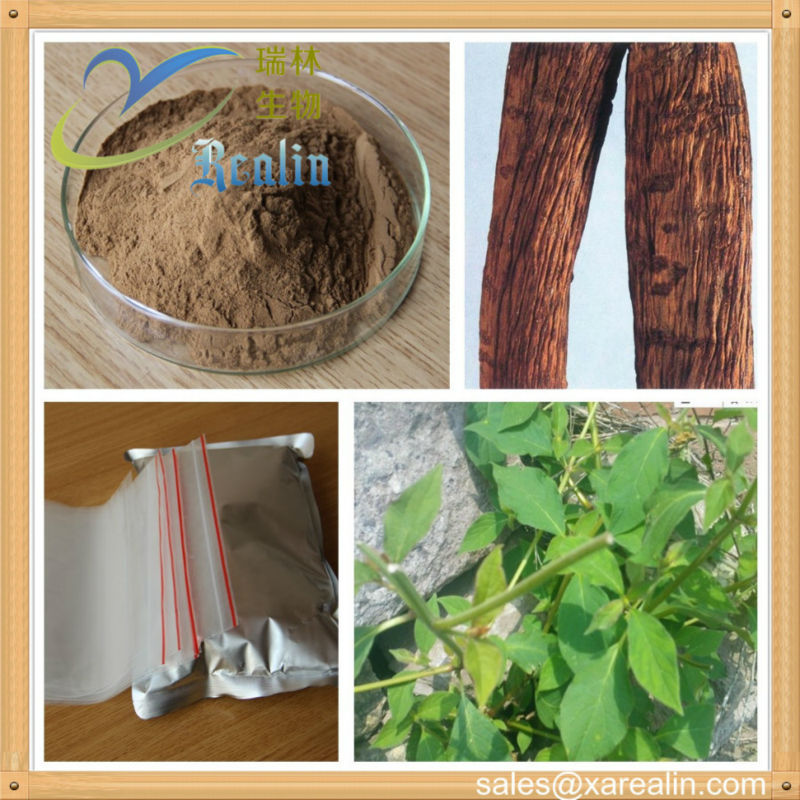 Purity Achyranthes Bidentata Extract Powder Triterpenoid Saponis Factory Price