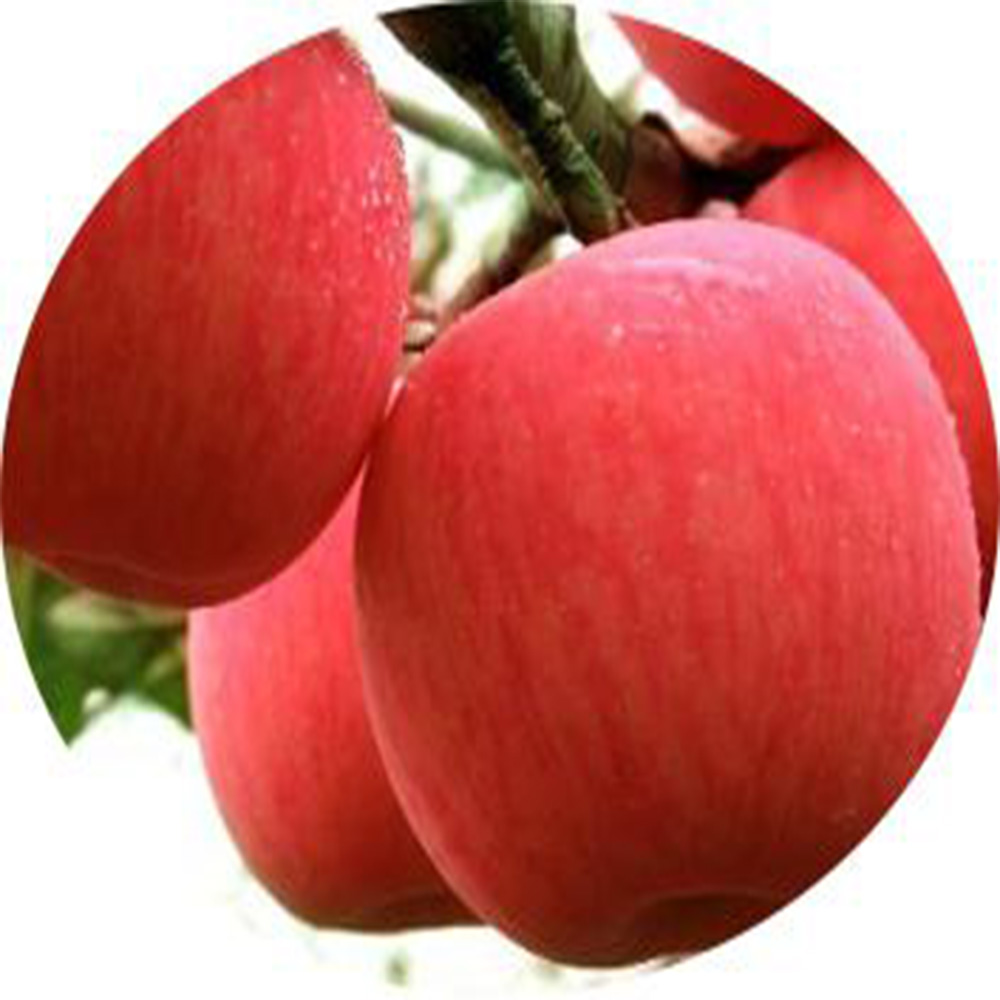 fresh red Fuji <strong>Apple</strong> 100/113/125cartons 16/18kg by shipping from China